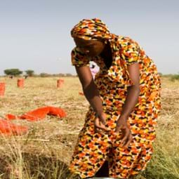 Cover image of GFA-31 International Food Security Assessment, 2020–30