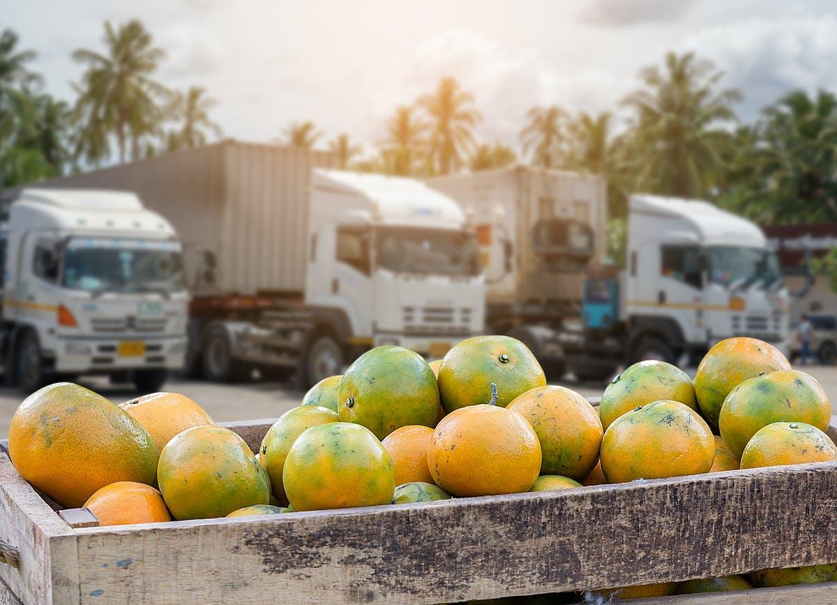 Oranges in box in front of trucks.
